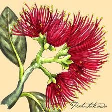 pohutukawa drawing - Google Search Illustration Botanique Vintage, Botanical Illustration, Botanical Drawings, Botanical Prints, Art Floral, Flax Flowers, Impressions Botaniques, Polynesian Art, Nz Art