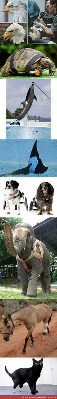 Cool animal prosthetics.