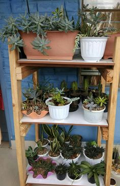 Succulents collections