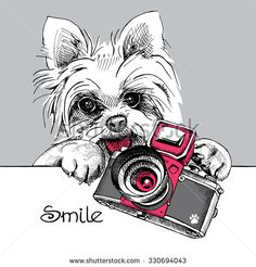 The poster with a portrait of the dog York with the camera. Vector illustration. - stock vector