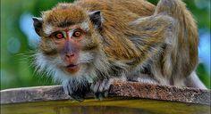Světový den biologické rozmanitosti Den, Bird, Animals, Animales, Animaux, Birds, Animal, Animais