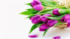 Ramos de Tulipanes Purpura