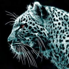 A truly magnificent animal of the cat family, The Leopard.Along with the tiger and other big cats their habitats are beingDestroyed by the least intelligent mammal on the plant... MAN