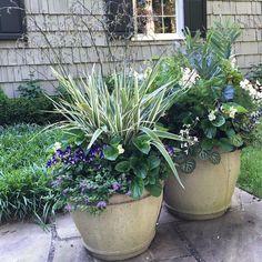 Summer shade: Dianella, Blue Fern, Begonia, Torenia, Bacopa, and others! #shadecontainergardeningideas