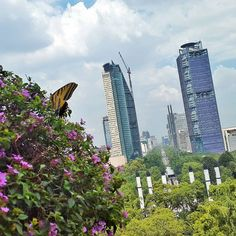 PROYECTO   TORRE BANCOMER   237m   50p - Page 451 - SkyscraperCity