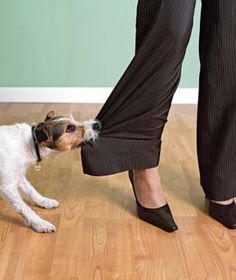 How to handle someone else's unruly pet.