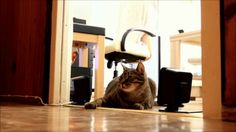 Some cats cower and hide, other cats go on the offensive and use their excellent reflexes and slapping skills.