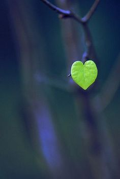 Navy Blue and Green in Nature - heart leaf I Love Heart, With All My Heart, Happy Heart, Lonely Heart, Heart Pics, Heart Pictures, Tiny Heart, Photo Heart, Heart In Nature