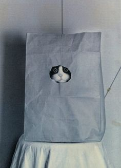 OMG! This looks just like my late Crunch...He would get in a bag with a hole in it and do this too. lol