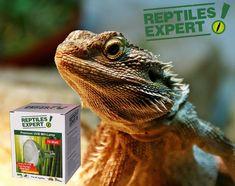 Reptiles Tipps für Experten - heute Bartagamen Immer wieder werden wir gefragt welche UVB-Lampe für welche Reptilien geeignet sind. Bartagamen als extrem sonnenliebend benötigen sehr viel Licht & Wärme. Empfehlung: 70 Watt UVB-Lampe im Abstand von ca. 30-40cm Animals, Iguanas, Reptiles, Tips, Animales, Animaux, Animal, Animais