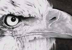 Eagles are some of the most imposing and graceful birds in the skies today, and I always marvel at their dominating presence and serious expressions. For Americans they are held very dear indeed, taking pride as the country's national bird. So for this tutorial, come with me and learn how to draw a striking portrait of this marvellous creature. | Difficulty: Intermediate; Length: Long; Tags: Photorealism, Drawing, Animals, Pencil