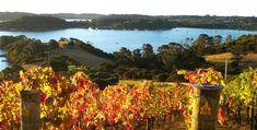 Te Whau Vineyard, New Zealand. #wine #vineyard
