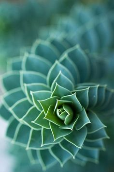 Succulent flowers-and-gardens