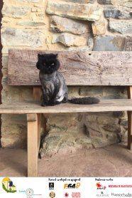 Camino Cat #minunipecamino