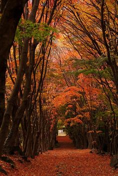 Autumn in Kawachi Wisteria Garden, Kitakyushu, Fukuoka, Japan