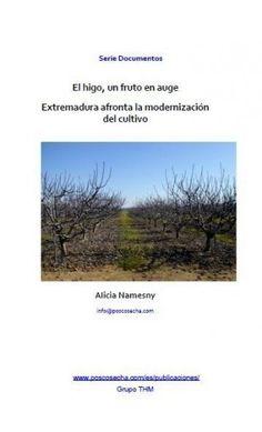 El higo, un fruto en auge - Extremadura afronta la modernización del cultivo