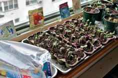 Egg Carton Greenhouse   DIY Seedling Greenhouses Ideas For Your Garden This Spring