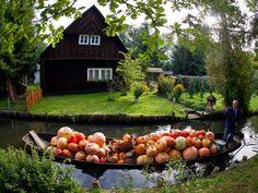 ALLPE Medio Ambiente Blog Medioambiente.org : El Bosque de Spree, una Venecia agrícola en Alemania
