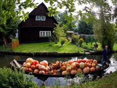 All set for Halloween! Farmer Harald Wenske transports pumpkins in a typical Spreewald boat in Germany. Photo copyright The Daily Mail. Spotted by @Pamela Price