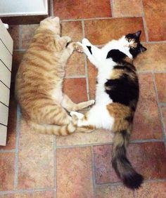 My 2 cats: Chip Chip & Ciuz
