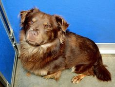 #FOUNDDOG 2-26-14 STRAY #ADOPTABLE #SANJACINTO #CA NEUTERED MALE 4 YEAR OLD 30.5 LBS RAMONA HUMANE SOCIETY 951-665-0719 https://www.facebook.com/photo.php?fbid=10151987327211657&set=a.455250831656.227183.686181656&type=1