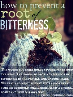 Do you struggle with a person, situation or something you cannot forgive? Find out how to prevent a root of bitterness from growing in your heart.