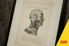 Illustrazione anatomica testa fine '800 con di GRANPAstudio