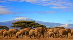 Tanzania Safari, Rhone, Beautiful Places, African, Photos, Explore, Adventure, Mountains, Yahoo Search