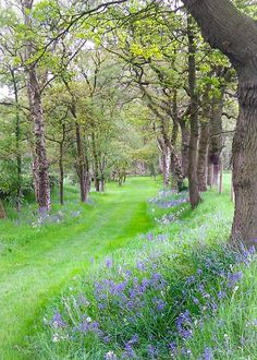 Ah, England, I want to walk down this green path ....lovely purple wildflowers make the trees pop ~ Bluebell avenue, Cheshire, England~ by MJ-Photographics