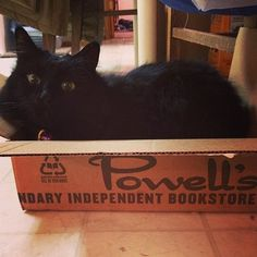 All the coolest cats love Powell's.        looks like my cat...   creepy... never stops glaring