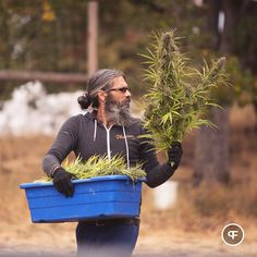 Patient Assessment Form - The Panday Group Growing Weed, Cannabis Growing, Medical Cannabis, Cannabis Oil, Weed Buds, Cannabis Cultivation, Weed Pictures, Cbd Oil For Sale, Marijuana Plants