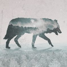 Wolf by Joaquin Chacon from my Photoshop for Lunch™ - Double Exposure Effect - Masks, Blends, Styles
