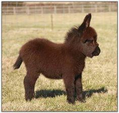 Mini donkey? Why don't I have one yet?!?!