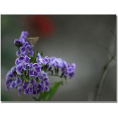 Trademark Fine Art Purple Flowers & Moth Canvas Art by Patty Tuggle, Size: 35 x 47, Multicolor
