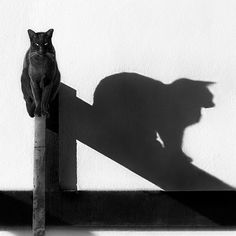 Me & My Shadow, by Tina Ind, via Flickr.