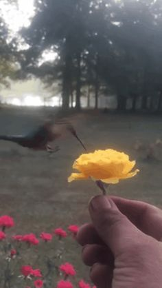 Discover & share this Hummingbirds GIF with everyone you know. GIPHY is how you search, share, discover, and create GIFs. Beautiful Roses, Beautiful Places, Amazing Gifs, Nature Gif, Gif Photo, Welcome Spring, Belle Photo, Bird Houses, Photos