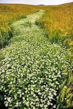 Caminho das flores