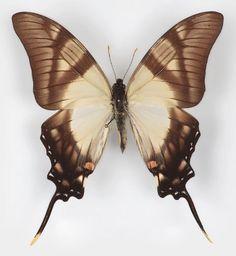 46Butterflies And Moths