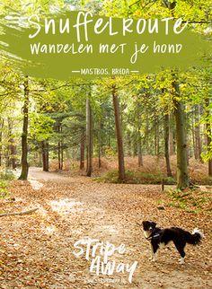 Hiking Dogs, Water Activities, Vizsla, Dog Life, Netherlands, Cute Dogs, Walking, Vacation, Adventure