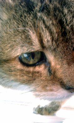 Adeline's eye