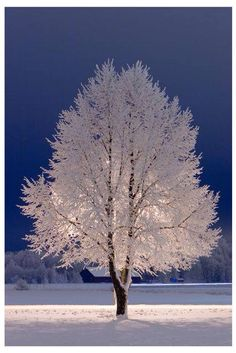 Snow Tree, Stockholm, Sweden Just beautiful ! All Nature, Amazing Nature, Beautiful World, Beautiful Places, Stunningly Beautiful, Trees Beautiful, Beautiful Landscapes, Foto Picture, Winter Magic