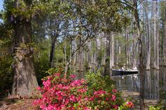 Cypress Gardens Attractions in Charleston: Read reviews written by 10Best experts and explore user ratings. What could be more romantic than wandering through a butterfly and bird habitat greenhouse, walking along quiet swamp and garden trails in bloom, or paddling through picturesque cypress trees and reflective blackwater creeks? This beautiful area of gardens, greenhouse, and swamp grounds in Moncks Corner, South Carolina is an ideal day trip destination for couples wishing to explore…