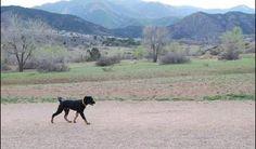 Bear Creek Dog Park   Colorado Springs