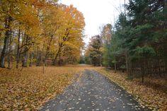Charleston Lake, Ontario Parks, Canada Ontario Parks, Parks Canada, Charleston, Sidewalk, Country Roads, Walkway, Walkways
