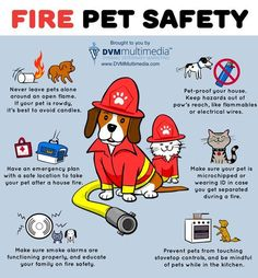20 Tips to Help You and Your Dog Survive a Fire - American Kennel Club