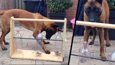 This Awesome Invention Will Keep Your Dog Well Entertained. It's Really Easy To Make Too.