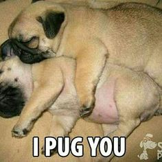 #Pug lovers, have we told you lately that we pug you?  ↪️ More #cuteness…