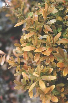 осенний листья