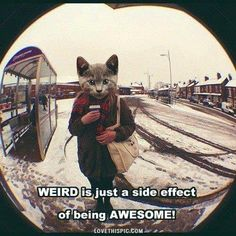And having a cat's head is a serious side effect of polyjuice potion gone wrong. You should see a healer about that, it's only meant for human transformations you know. Crazy Cat Lady, Crazy Cats, Psy Art, Stay Weird, Crazy Quotes, Mindset Quotes, Sleepy Cat, Funny Cute, Hilarious