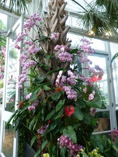 Mounted orchid display: photo by Petra Williams https://www.houseplant411.com/askjudy/how-to-mount-an-orchid-on-a-board